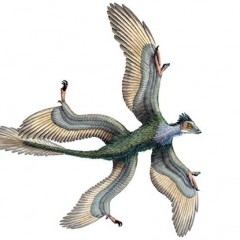 Динозавр Микрораптор