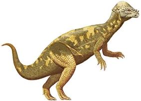 Динозавр Пахицефалозавр