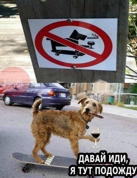 Собакам нельзя