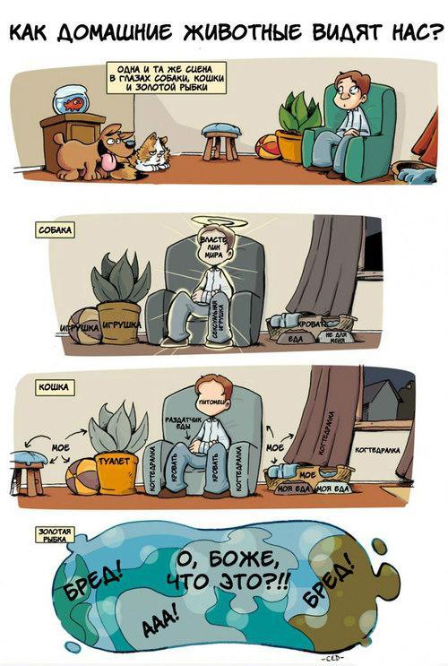 Как вид мир наши питомцы