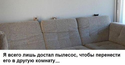 Про пылесос и котов
