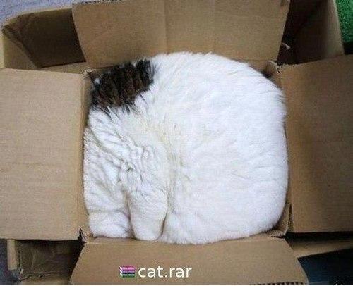 Архив из кота