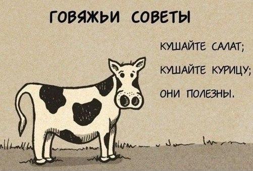 Совет от коровы