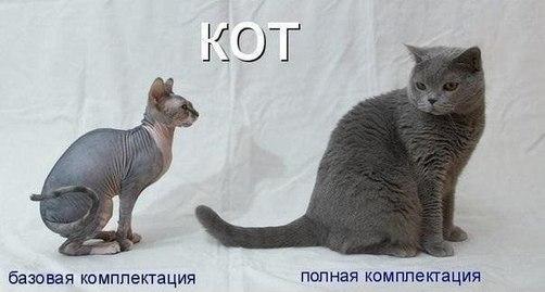 Комплектация кота