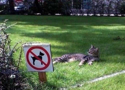 Всё по правилам