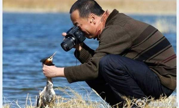 Фото на природе диких животных