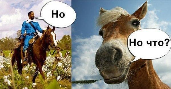 Лошадь не понимает