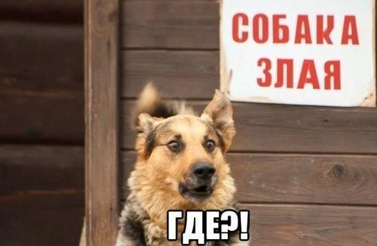 Очередная злая собака