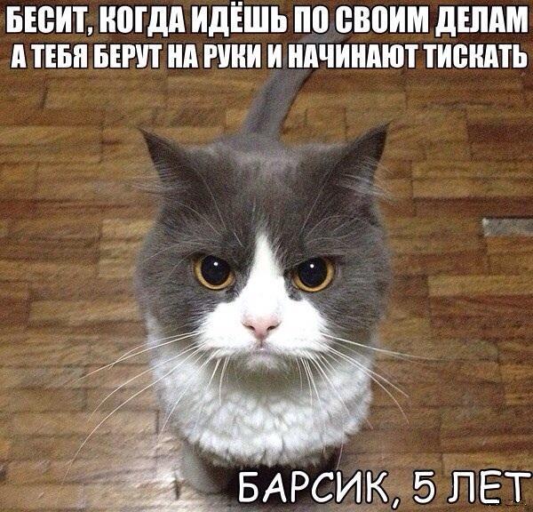 Будни кота