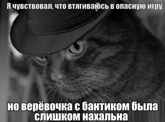 Будни кота 1