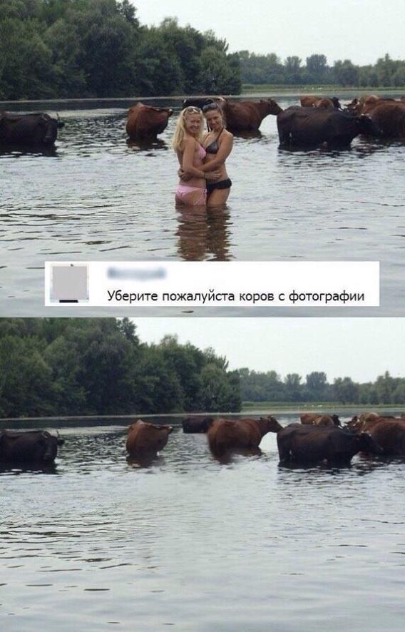 Коровы лишние