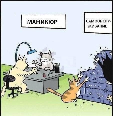 Маникюр для котов