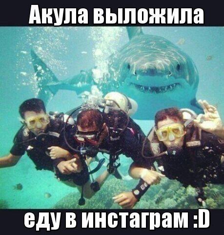 Инстаграмм акулы