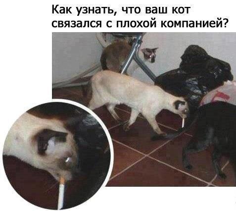 Плохой кот