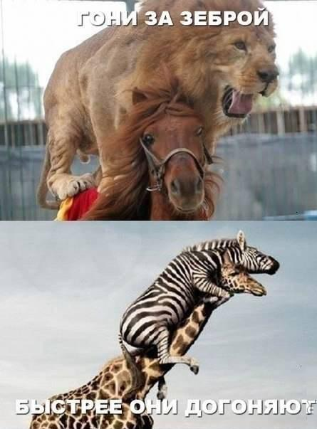 Погоня животных