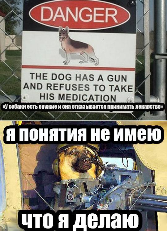 Злая собака 1