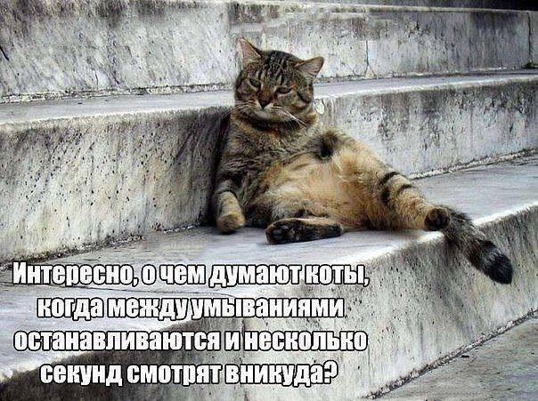 Мысли котов