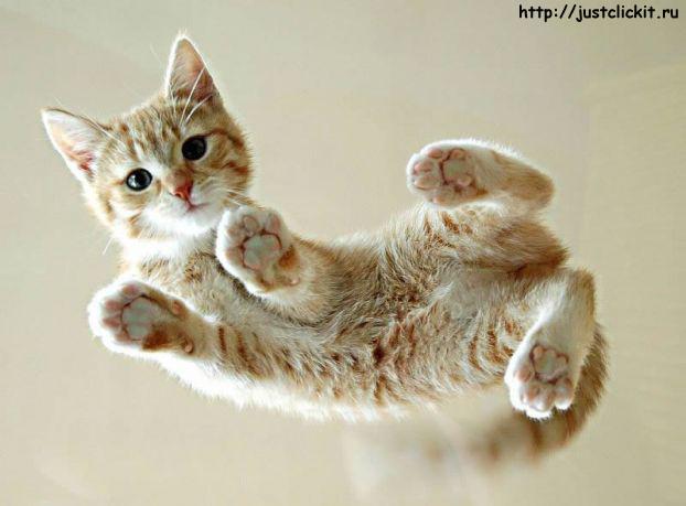 Просто Котэ - просто кот
