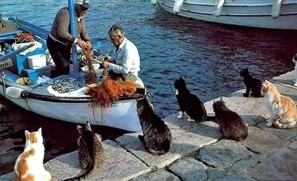 Коты собрались на обед