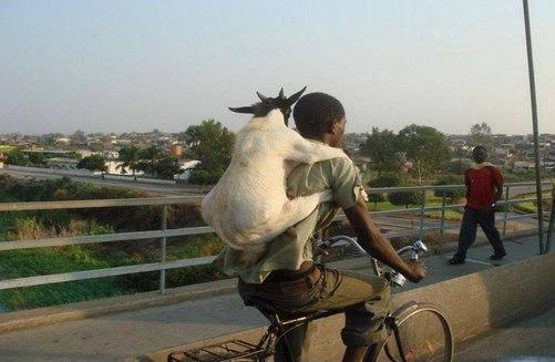 В Африке живут белые черти
