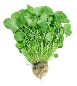 Овощи - Кресс садовый