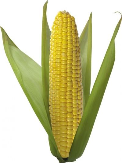 Овощи - Кукуруза