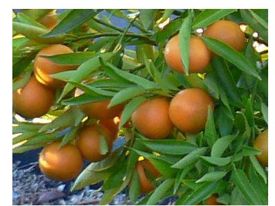 Фрукты - Оранжело