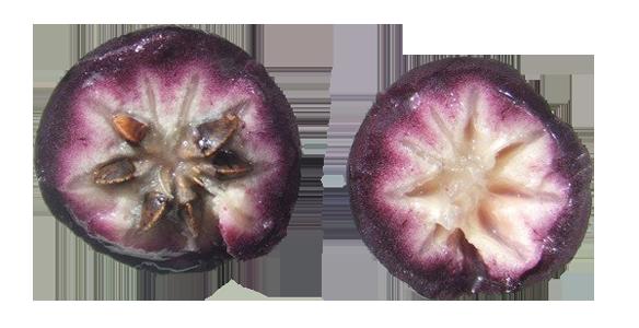 Фрукты - Звёздное яблоко