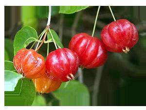 Фрукты - Суринамская Вишня